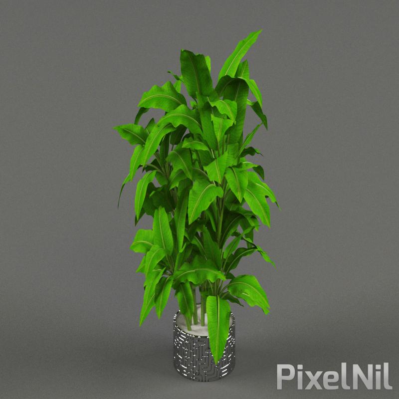 PLANT01 P3D14 img2
